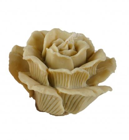 Роза большая белая