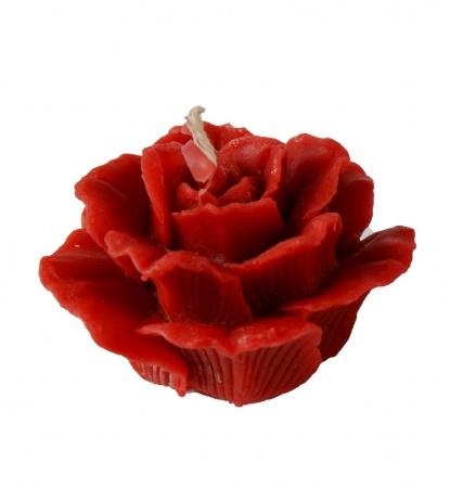 Роза большая красная